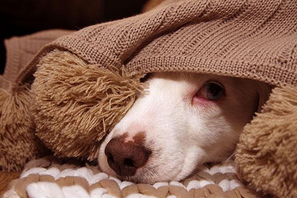 Fobia dei rumori nei cani