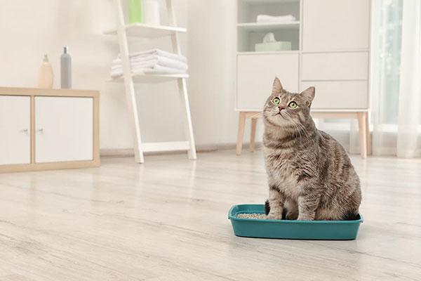 Il gatto e la marcatura: significato e soluzioni