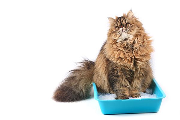 Problemi di eliminazione del gatto