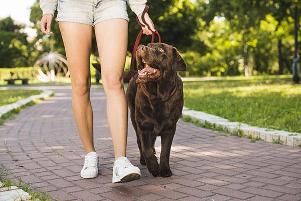 Educare il cane alla passeggiata