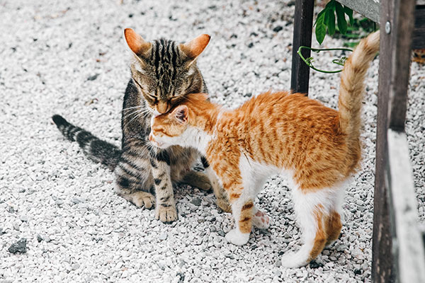 Il gatto e la socialità