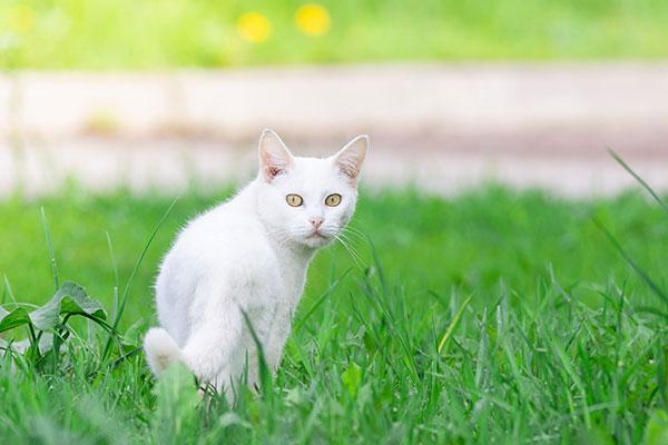Il mondo e le sensazioni del gatto