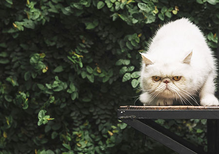 Problemi comportamentali del gatto